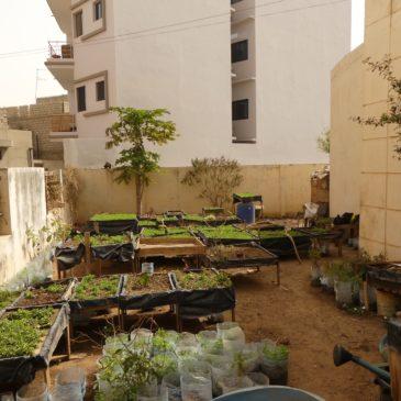 Jardins urbains, Sénégal