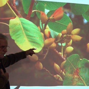 La Forêt Fruitière et la greffe par Maurice Chaudière