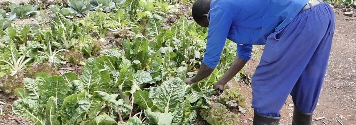 Un jardin en permaculture nourrit 370 enfants orphelins au Swaziland