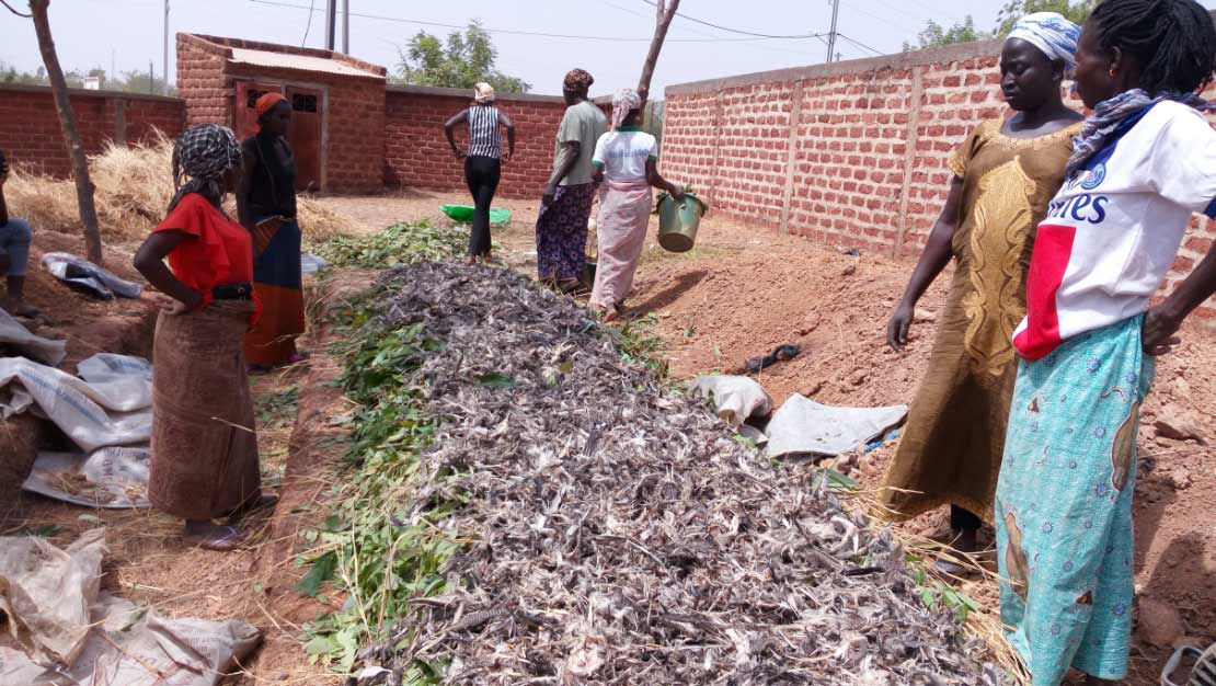 Création d'une planche de compost