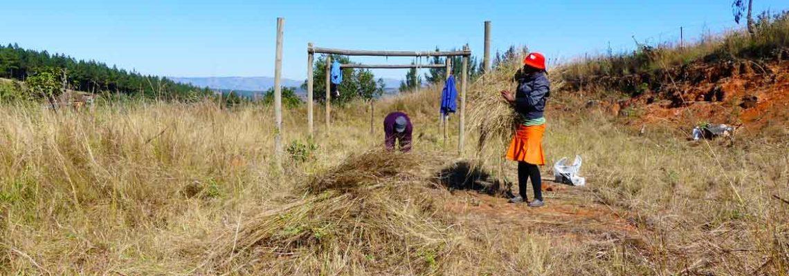 Macambeni – Préparation du terrain