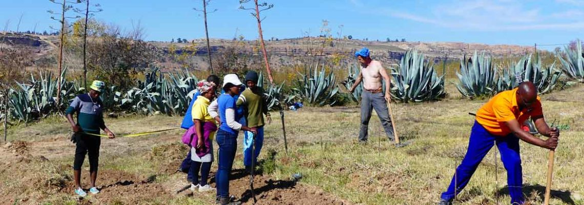 Mamohato Children Center – préparation de la parcelle d'agroforesterie