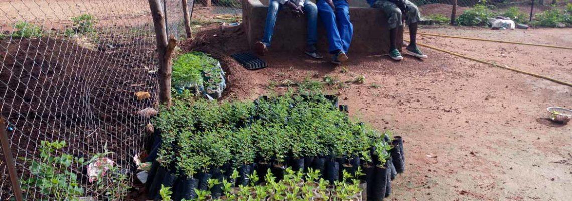 Premiers plants d'arbres fertilitaires – Yagma